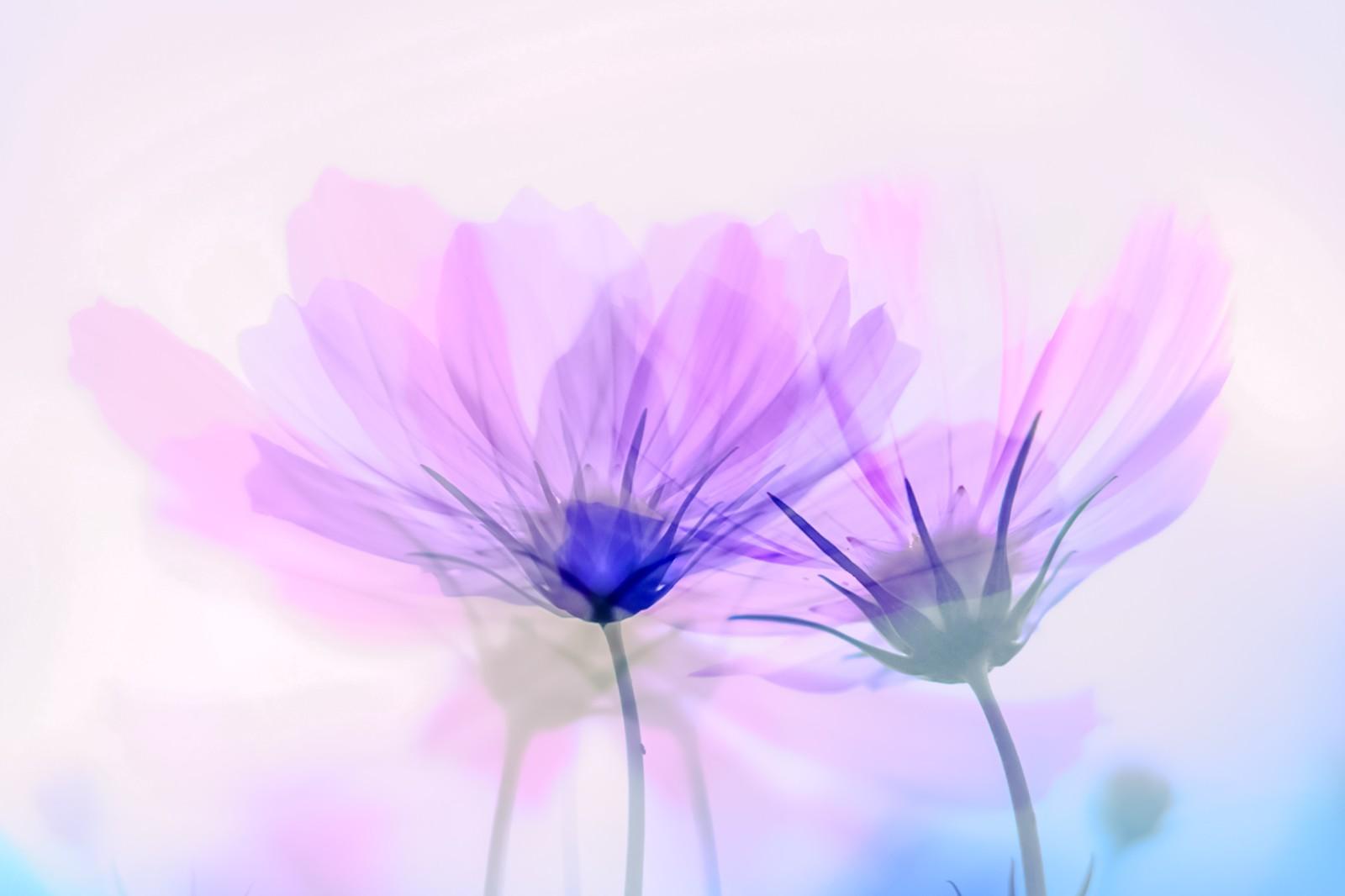 潜在意識と花