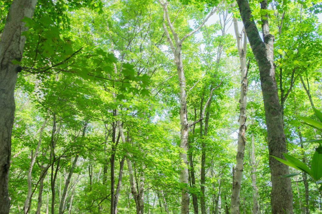 潜在意識と木