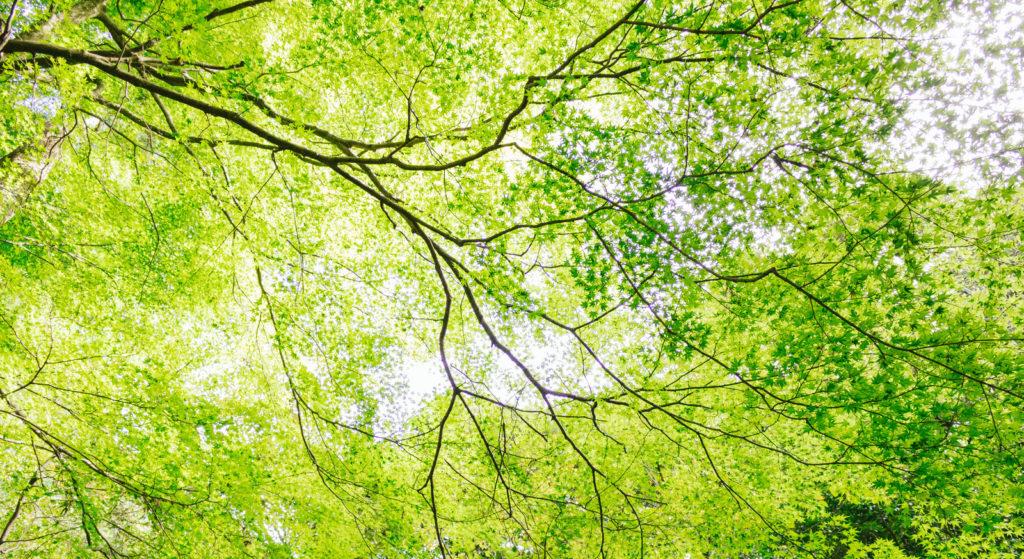 木と潜在意識
