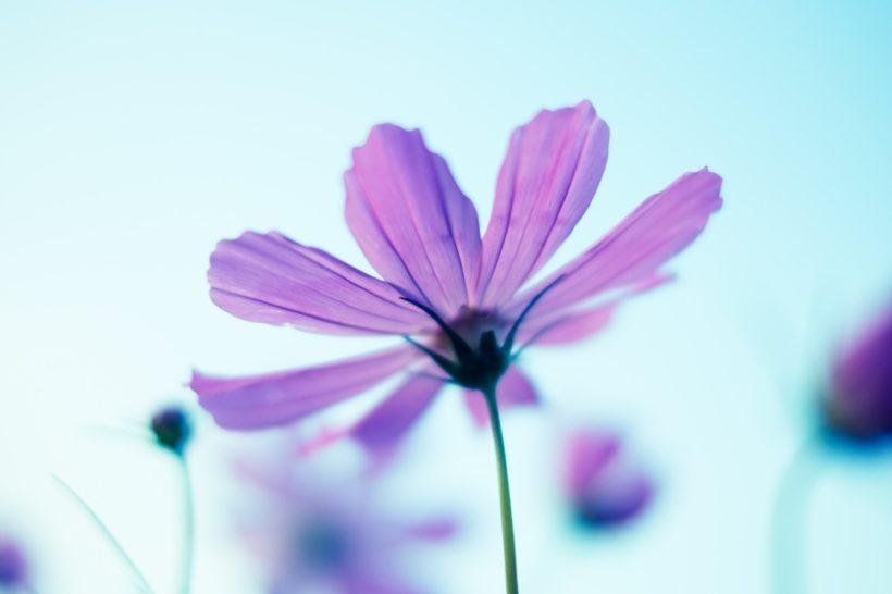 潜在意識:花 瞑想