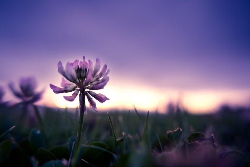 花と空のイメージ写真