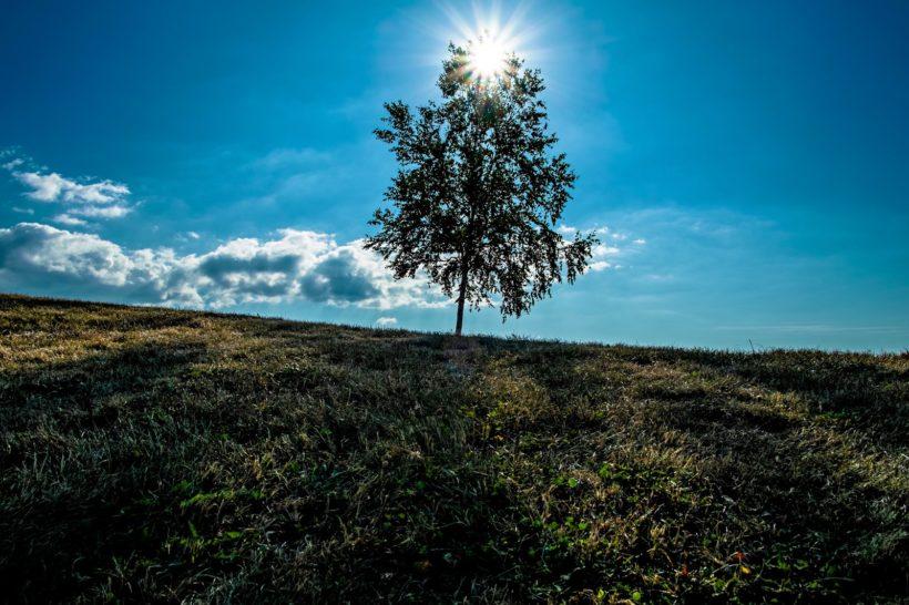 樹の景色~セルフイメージを変える
