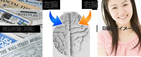 左脳で言語、右脳でイメージ
