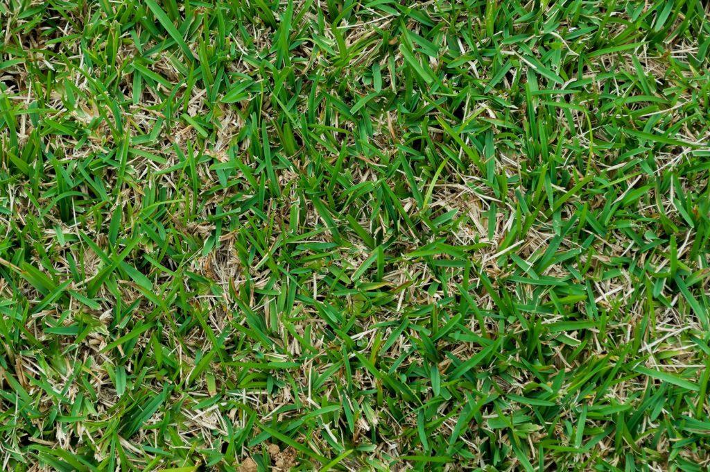 ゴルフ場のグリーンの芝